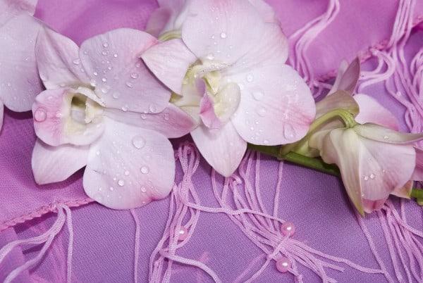 flores escort delicada
