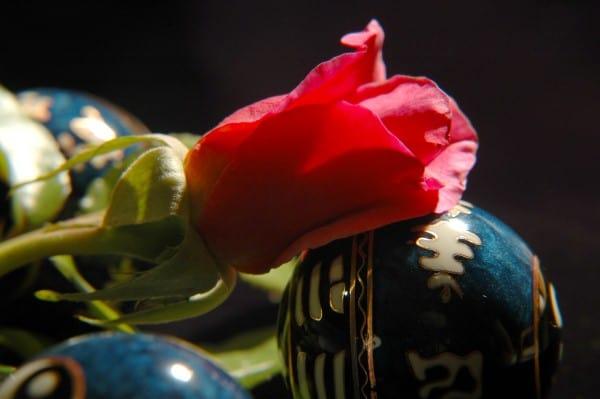 Flor roja masaje